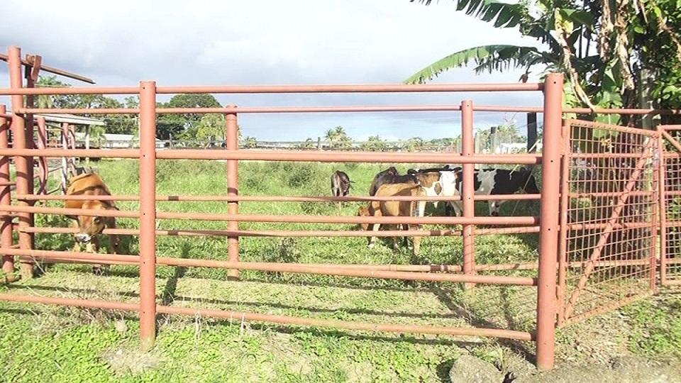 Extra Effort Needed To Boost Fiji's Meat Industry